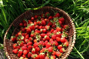 Delicious strawberries.