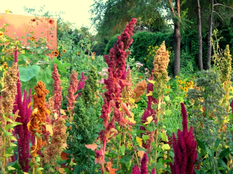 Quinoa and amaranth add a lot of beauty.