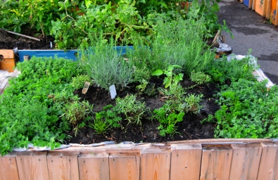 One of the herb garden planters.