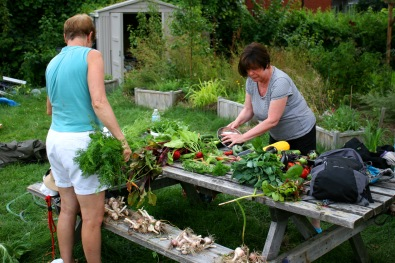 Member gardeners processing the harvest.
