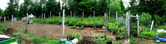I created a vegetable garden in 2014 in this fenced area. It is seen here, half cleared with my nursery plants being protected from the deer temporarily.