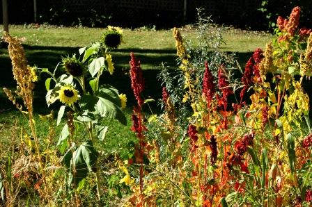 Sunflower, seaberry, quinoa, and amaranth.