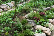 The once gravel covered area, is now lush with blueberries, strawberries, wintergreen and other native groundcovers.