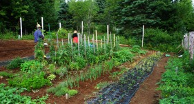 The beginnings of the vegetable garden.