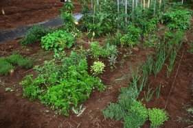A variety of herbs.