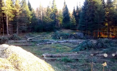 The cleared area with a pile of woodchips.
