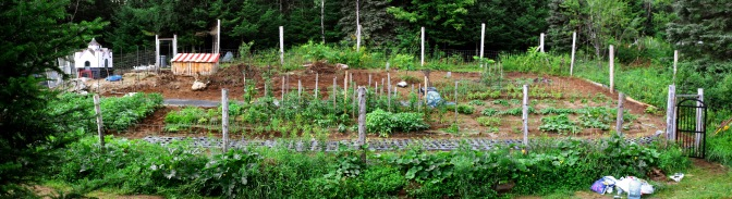 A view of the vegetable garden, mid season.