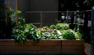 I constructed and maintained this planter garden at Our Lady of Pompeii School